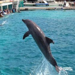 clube-de-praia-isla-discovery-catamara-dolphin-discovery-isla-mujeres-cancun-golfinho-pulando