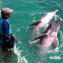 clube-de-praia-isla-discovery-catamara-dolphin-discovery-isla-mujeres-cancun-treinador-com-golfinhos