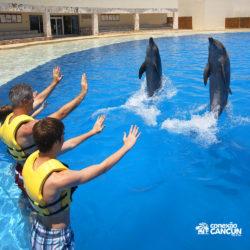 ventura-park-parque-cancun-golfinhos-dancando