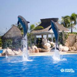 ventura-park-parque-cancun-golfinhos-saltando
