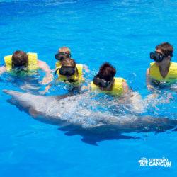ventura-park-parque-cancun-grupo-acariciando-golfinho
