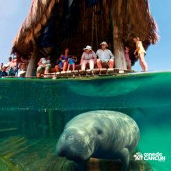 xel-ha-coba-parque-cancun-grupo-observa-peixe-boi