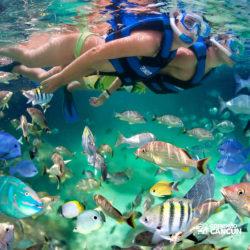 xel-ha-parque-cancun-casal-mergulha-no-meio-dos-peixes