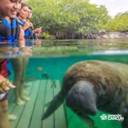 xel-ha-parque-cancun-encontro-com-peixe-boi