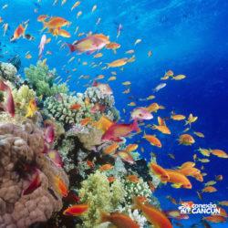 clube-de-praia-caribbean-funday-isla-mujeres-cancun-arrecife