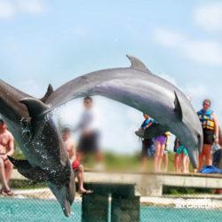 clube-de-praia-discovery-chankanaab-cozumel-cancun-golfinho-pulando
