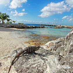 clube-de-praia-discovery-chankanaab-cozumel-cancun-iguana