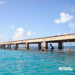 clube-de-praia-isla-discovery-dolphin-discovery-isla-mujeres-cancun-dolphinario