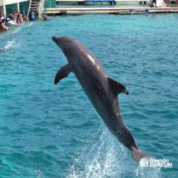 clube-de-praia-isla-discovery-dolphin-discovery-isla-mujeres-cancun-golfinho-pulando