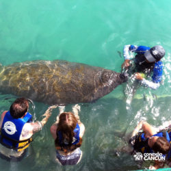clube-de-praia-isla-discovery-dolphin-discovery-isla-mujeres-cancun-grupo-com-peixe-boi