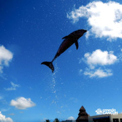 dive-with-dolphin-discovery-cancun-cozumel-isla-mujeres-golfinho-saltando