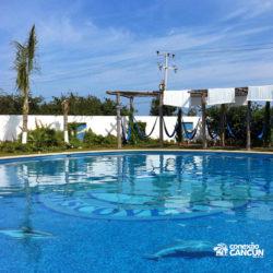 dolphin-royal-swim-vip-plus-isla-mujeres-cancun-golfinhos-na-piscina