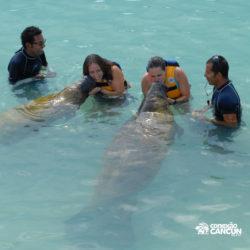 encontro-com-peixe-boi-dolphin-discovery-cozumel-cancun-isla-mujeres-beijo