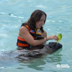 encontro-com-peixe-boi-dolphin-discovery-cozumel-cancun-isla-mujeres-mulher-alimenta-peixe-boi