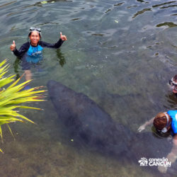 encontro-com-peixe-boi-dolphin-discovery-cozumel-cancun-isla-mujeres-posando-para-foto-ao-lado-manateee