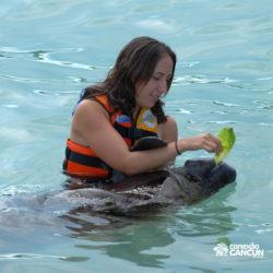 sea-life-circle-dolphin-discovery-riviera-maya-puerto-aventuras-cancun-mulher-alimenta-peixe-boi