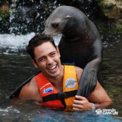 sea-lion-discovery-cozumel-cancun-leao-marinho-abraca-e-beija-homem
