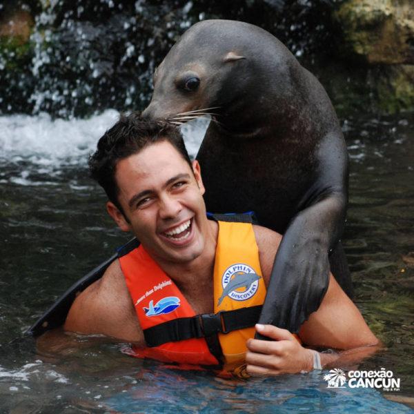 Leão Marinho no programa Sea lion discovery