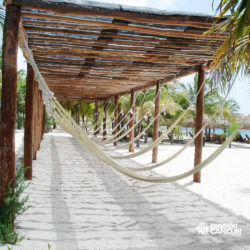 sea-lion-discovery-cozumel-cancun-rede-de-praia