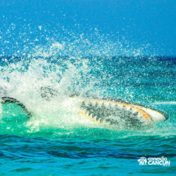 aventura-jetpack-adventures-cancun-seabreacher05